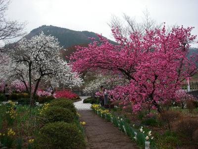 桃も桜も・・・みさか桃の花まつり
