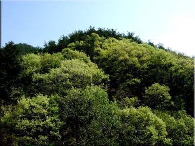 新緑の甲斐駒ケ岳へ。