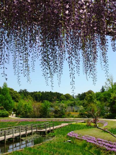清水公園・花ファンタジアを訪ねて ☆4月28日の花模様は多彩に