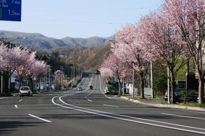 99-ちょっと寄り道、「登別温泉の桜並木」