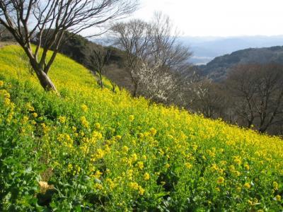 城下町 佐貫町を散策 菜の花咲くマザー牧場をめざそう!