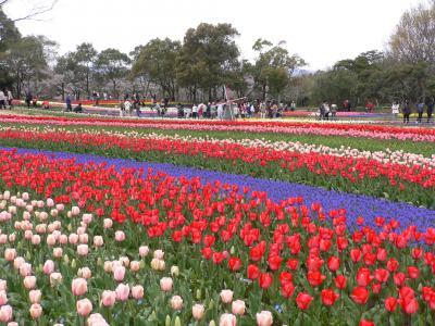 木曽三川公園 チューリップ祭 2009