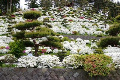 [09]春の糸魚川花めぐり