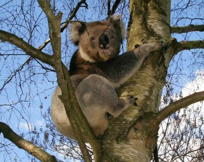 オーストラリア、メルボルン、映像特集
