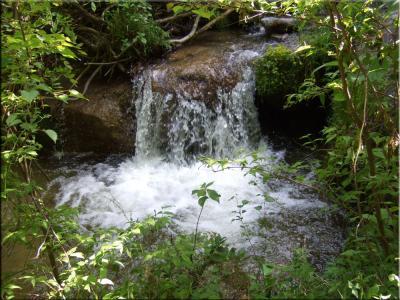 甲斐駒ヶ岳山麓の、山荘付近の緑。