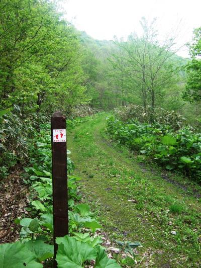100-北海道を歩こう!フットパス…【黒松内・チョボシナイ】歩いた、歩いた20km!