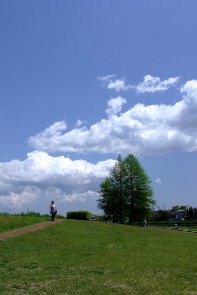 自然散歩-葛西親水緑地