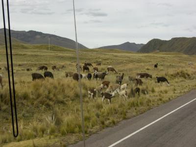 Peru~クスコ→プーノ