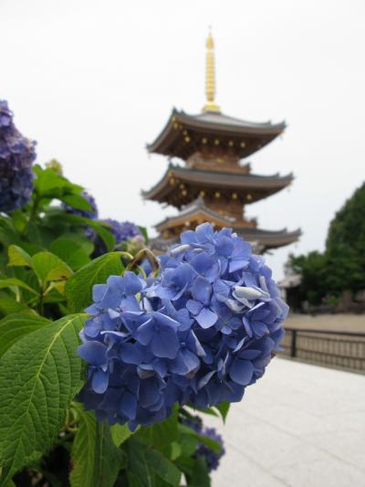 長慶寺  紫陽花が綺麗です。