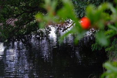 自然散歩-谷古田河畔緑道(南側)+東京葛西用水路