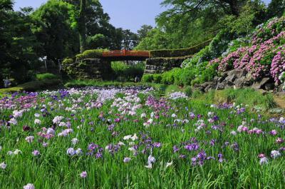 小田原城の紫陽花&花菖蒲