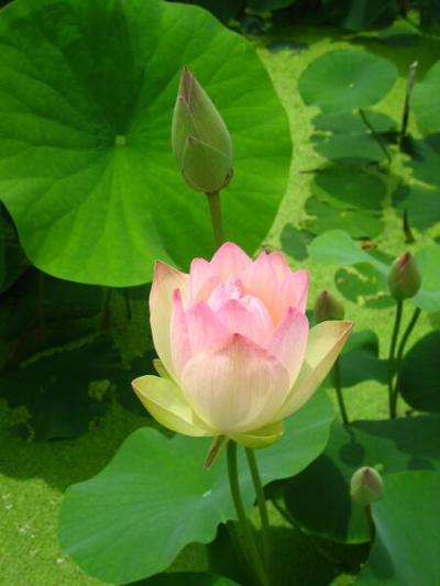 花蓮と気比神宮