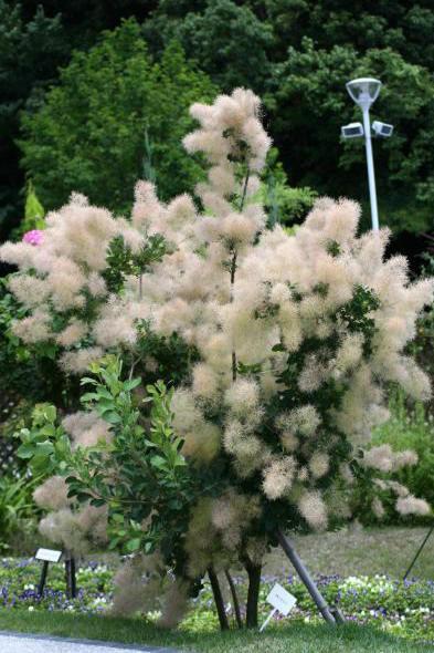 ひとり旅 [557] おしゃれな花たちと緑の庭園♪<やまぐちフラワーランド>山口県柳井市