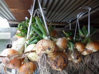 51京丹波町秘密基地 京丹波町の家庭菜園