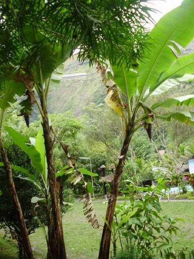 ボリビア国ラパス県の楽園コロイコ−南米アンデス山脈