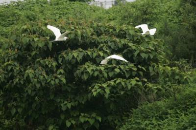 自然散歩-新方川緑道
