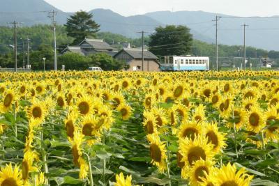 まんのう町の向日葵畑2009
