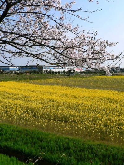 日本の旅 関西を歩く 滋賀県高島市の琵琶湖岸周辺