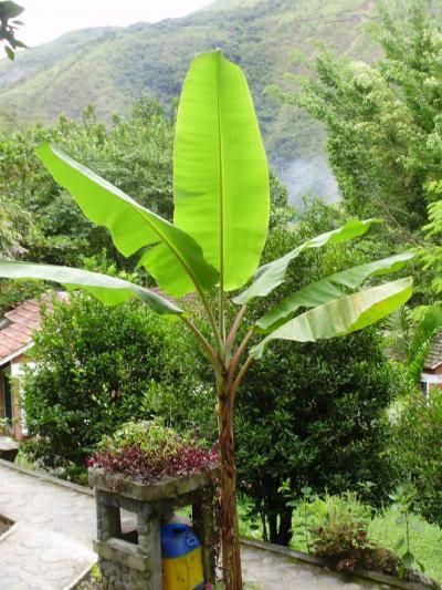 ボリビア国ラパス県の楽園コロイコのリゾートホテル−南米アンデス山脈 #3