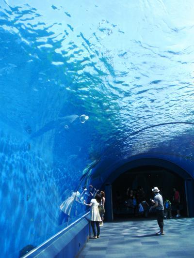 八景島-04 ドルフィン・ファンタジーの空間 ☆シロイルカと対面!