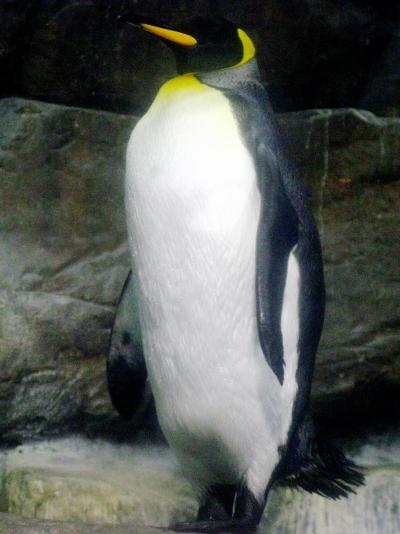 八景島-06 ペンギン・ホッキョクグマ・アザラシ等 ☆氷の海に生きる