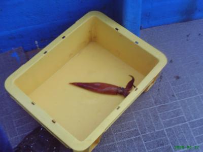 イカ釣りの旅