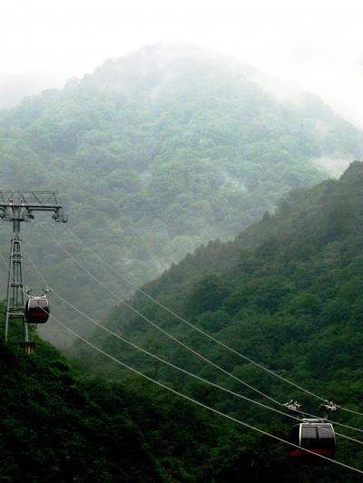 谷川岳:ロープウェイで天神平へ ☆お花畑は雨霧のもと