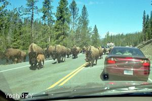 Yellowstone NP and Grand Teton NP in Summer