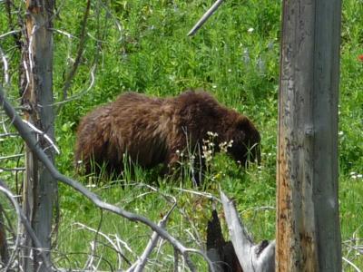 イントゥ・ザ・ワイオミング。5 イエローストーン国立公園へ引き籠り2日目 キャニオンカントリーでお泊まり