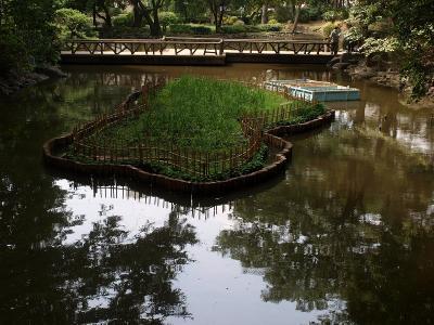 残暑 広尾 有栖川記念公園ー1
