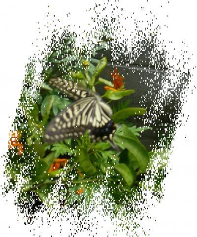 続・なつやすみのしゅくだい「昆虫採集と植物採集」ー2−