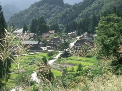 相倉合掌集落をススキの間から眺める。日本の景色。