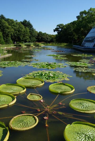 青空に誘われて京都府立植物園へ~ Part 1 ナンバンギセルは何処?
