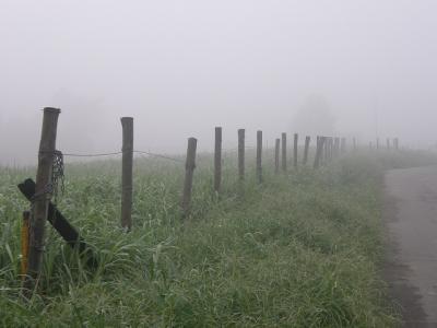 霧中の早朝ウォーキングでの出会い