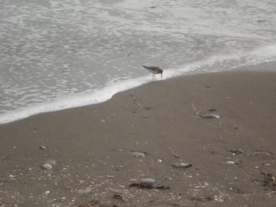 富津岬・・・<ログハウスと夕暮れの浜千鳥>・・