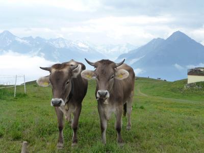 2009年ドイツ・オーストリアの旅【15】オーストリア3.《チロル マイアーホーフェン~ペンケンバーン》