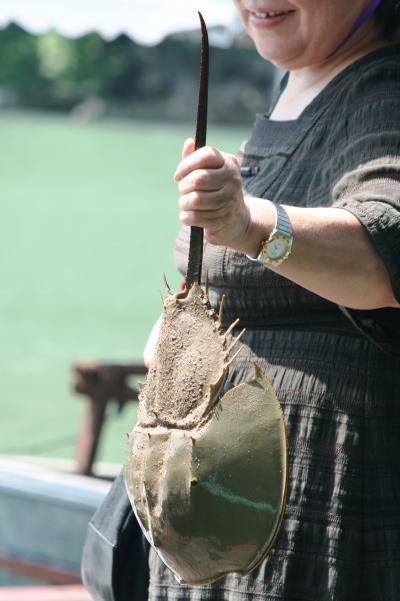 2009秋、ベトナム旅行記2(16):9月14日(6):ハロン湾クルージング