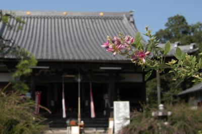 長浜市・神照寺の萩