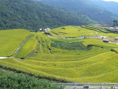 稲刈り間近の大中尾棚田