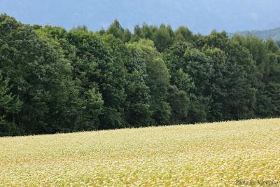 新蕎麦の季節までもう少しお待ち下さい。そばの花咲く戸隠展望苑 / 長野県