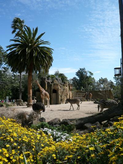 オーストラリア、メルボルン動物園 (Melbourne Zoo)