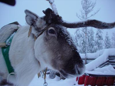 ヘルシンキからロヴァニエミ ~サンタクロース村とオーロラを訪ねて~ (2)