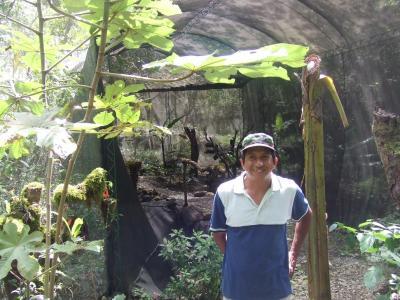 ボリビア国ラパス県の楽園コロイコの蝶々園−南米アンデス山脈