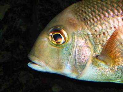 Japan 品川の水族館からワープ失敗の巻