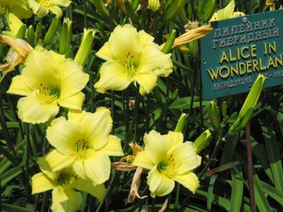2009年ウクライナ旅行第6日目(5)ヤルタ:花のタイミングは微妙だったニキーツキー植物園