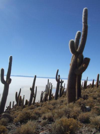 ウユニ塩湖とコイパサ塩湖の中間にある町、サリナス デ ガルシ メンドサ町の向かいのウユニ塩湖