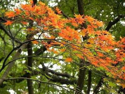 美しく生まれ変わった 新 根津美術館−3 秋色に染まり始めた庭園