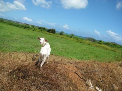 沖縄離島の旅2009(3日目:竹富・小浜島)