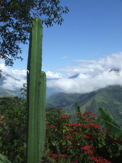 ボリビア国ラパス県の楽園コロイコ町周辺の景色−南米アンデス山脈