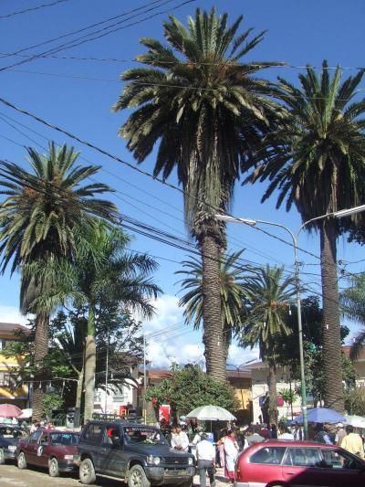 ボリビア国ラパス県の楽園コロイコ町と周辺の景色−南米アンデス山脈